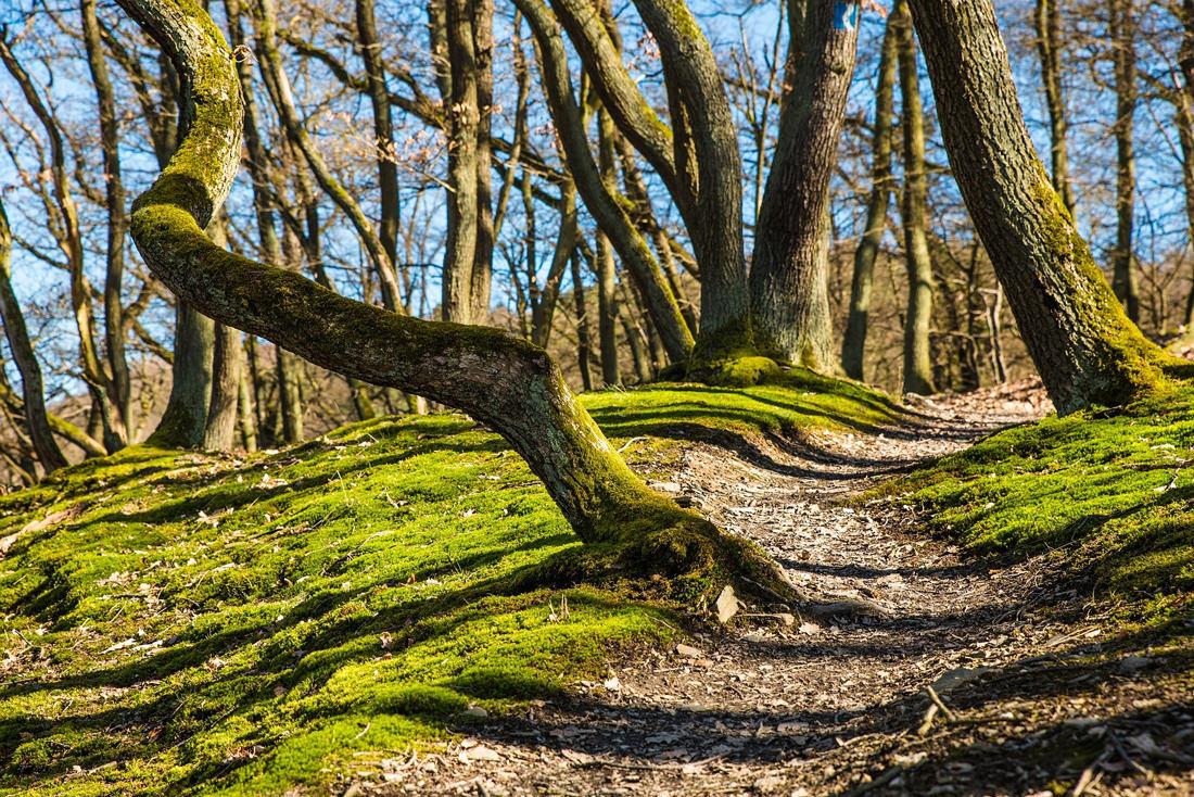 Walken im Wald